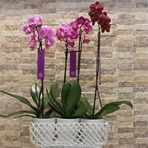 Örgü Seramik 4  Dallı Orkide