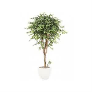 Yapay ficus Ağacı