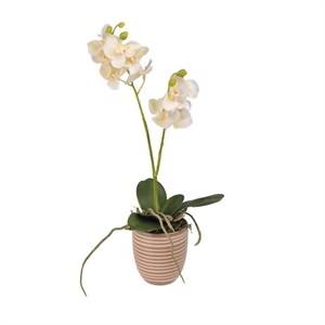 Yapay Saksılı Orkide