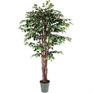 Dekor Ağacı