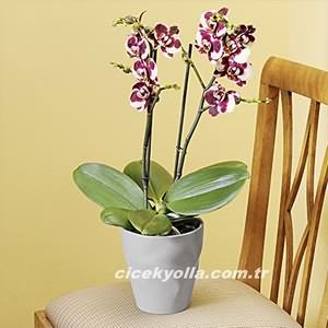 Sevdiklerine Kaliteli Orkide Gönder