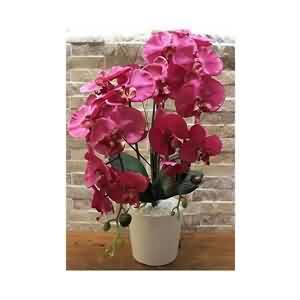 Yapay Orkide Çiçeği