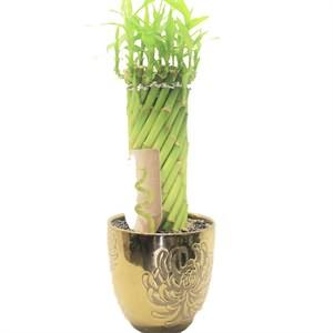 Sıralı Bambu Siparişi