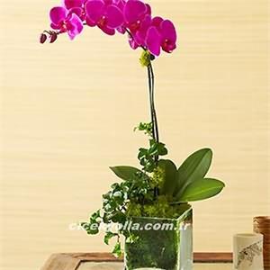 Orkide Çiçeği Gönder