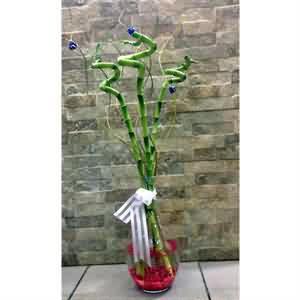Uygun Fiyata Bambu