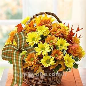 Sonbahar Çiçeği Papatyalar