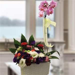 Mutlu Pembe Orkide ve İsyantus