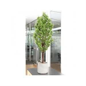 Yapay Eukaliptus Ağacı