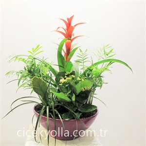 Çiçekli Bitki Arajmanı