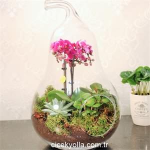 Cam Armut ve Minyatür Orkide