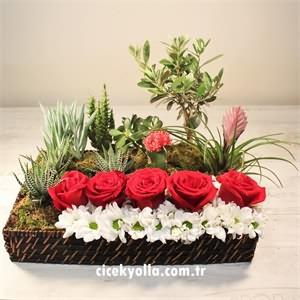 Biricik Sevgilime Kırmızı Güller ve Kaktüsler