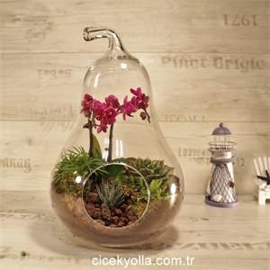Armut Camda Minyatür Orkide