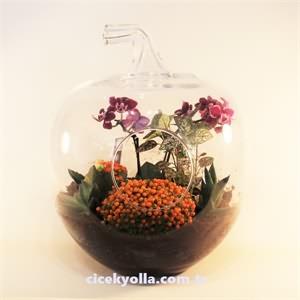 Cam Elma İçerisinde Mini Orkide Ve Terrarium