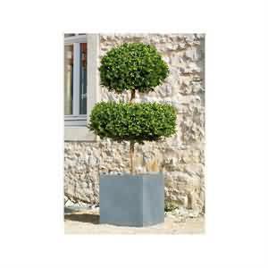 Yapay Bukszpanu Ağacı