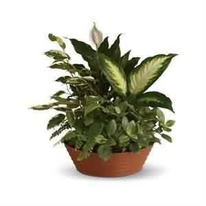 bitki potporisi