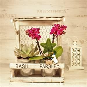 Mini Orkide Evimiz