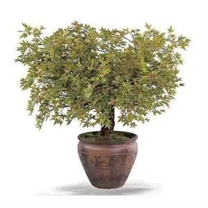 Yapay Bonsai ağacı