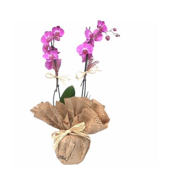 2 Dallı Mor Orkide Dizayn