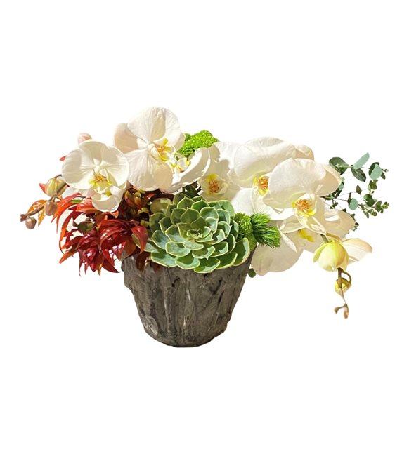 Alanis Orkide Sukulent Serisi