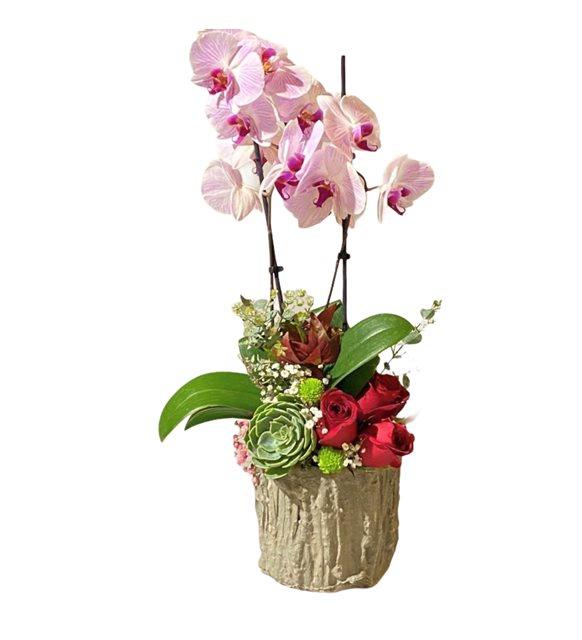 Almes Orkide Gül Serisi