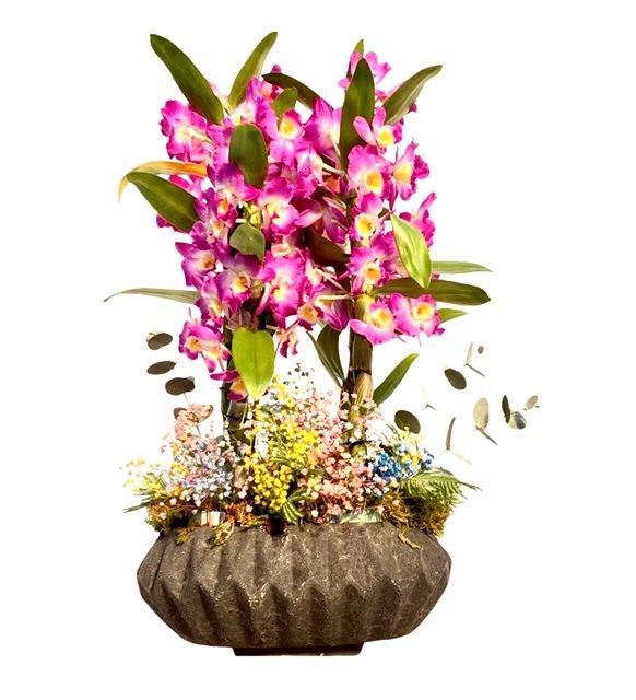 Bahar Renkli Orkide Serisi