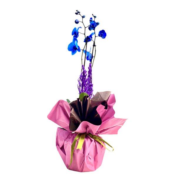 Behire 2 Dallı Mavi Orkide Serisi