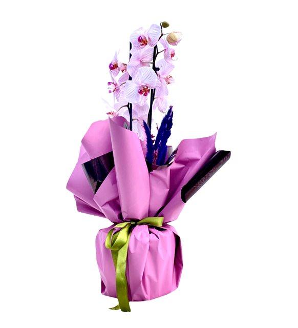 Belgi Renkli Orkide Serisi