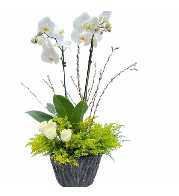 Beyaz Gül Ve Orkide Serisi
