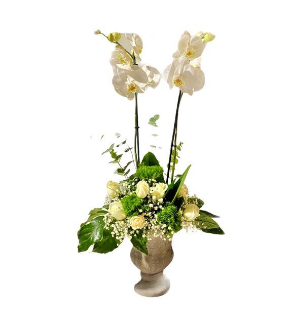 Beyaz Orkide Beyaz Gül Serisi