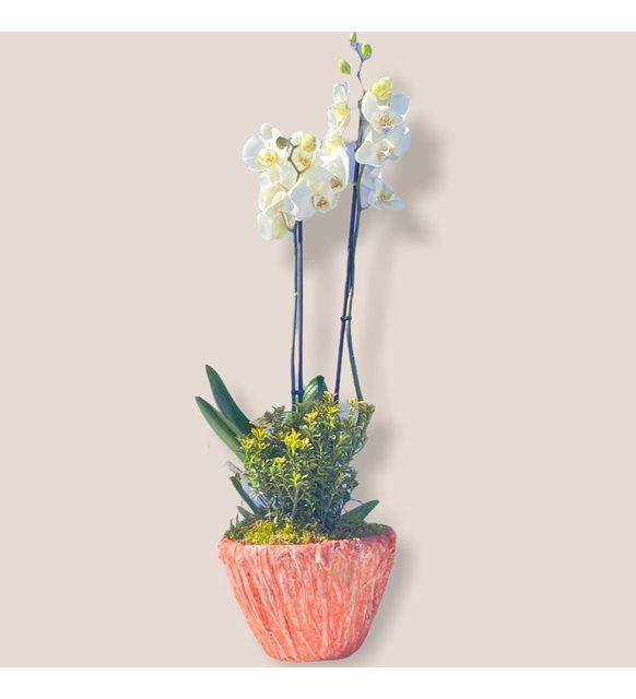 Bloossom Beyaz Orkide Serisi