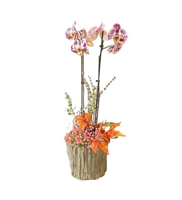 Linda Orkide Serisi