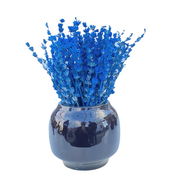 Mavi Şoklanmış Lavanta Serisi