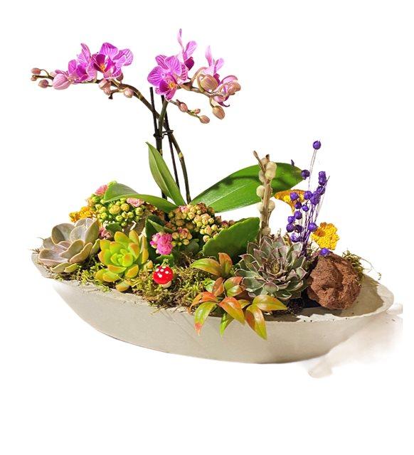 Mini Orkideli Sukulent Dizayn