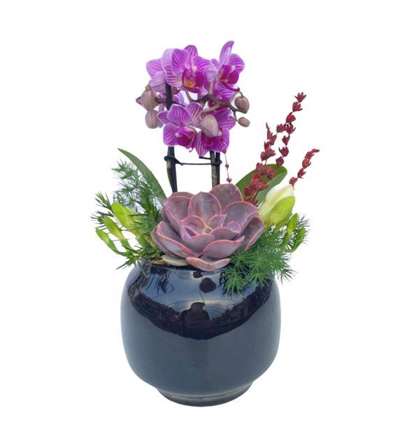 Mini Orkideli Sukulent Serisi