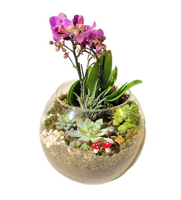 Orkide Teraryum Bahçe