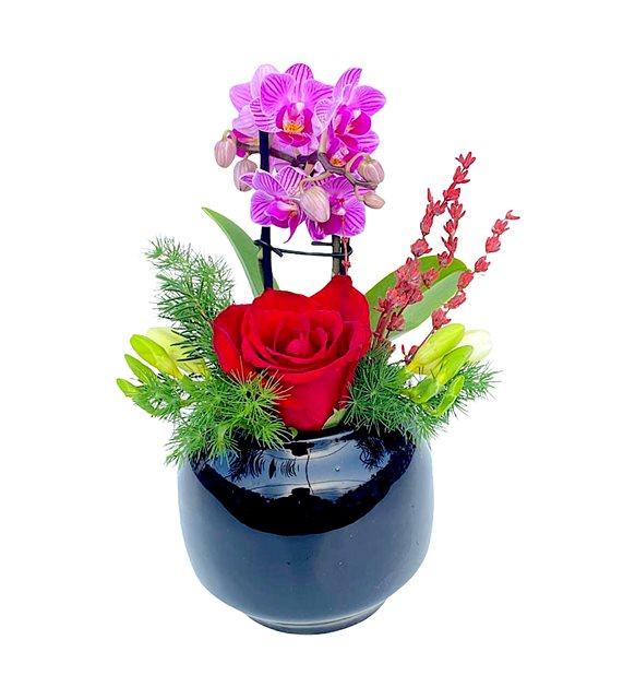 Orkideli Kırmızı Gül Serisi