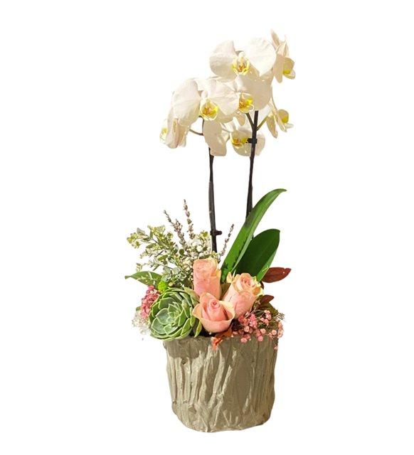 Pembe Güllü Orkide Dizayn