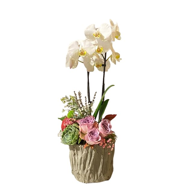 Renkli Gül Orkide Serisi