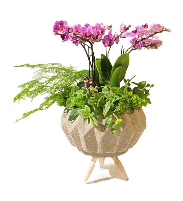 Veronika Orkide Serisi
