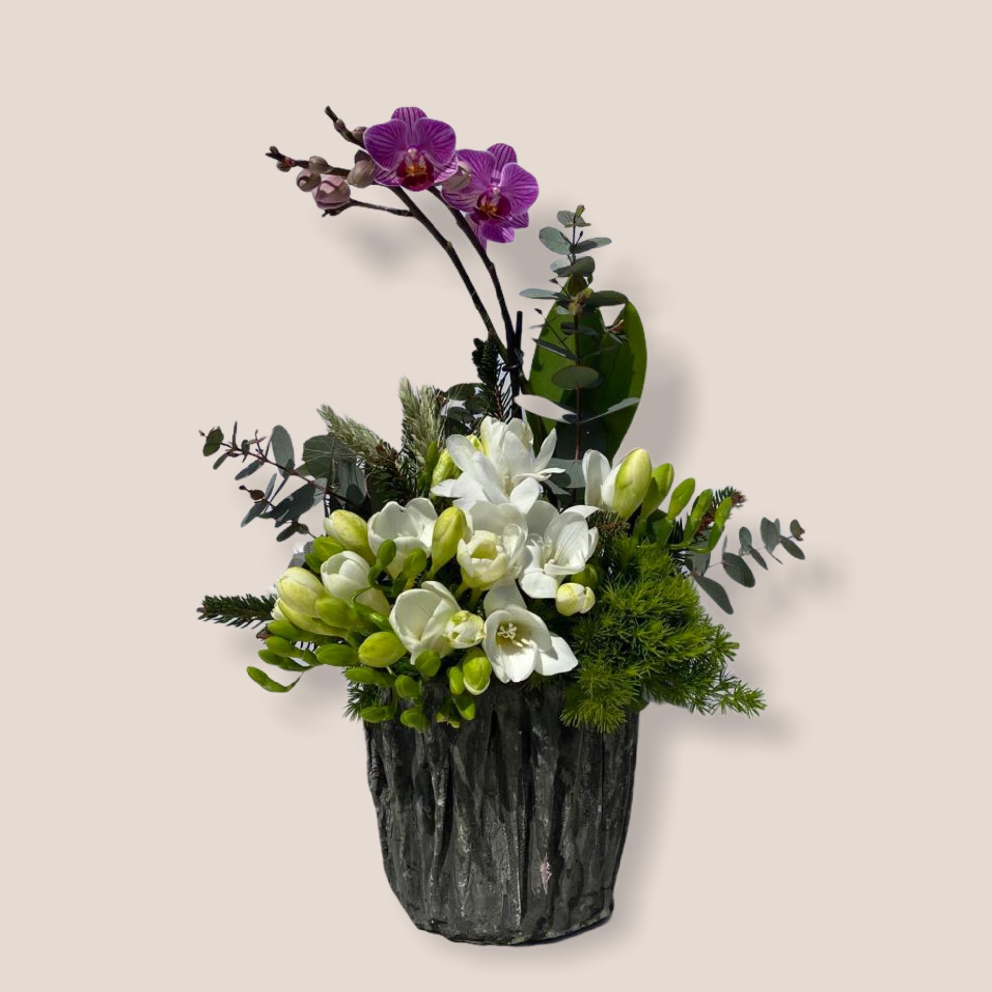 Violet Mini Orkideli Frezya Serisi