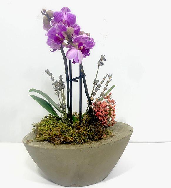 Alisa Mini Orkide Serisi