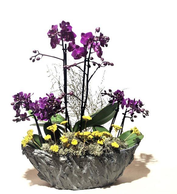 Butik Mini Midi Orkide Dizaynı