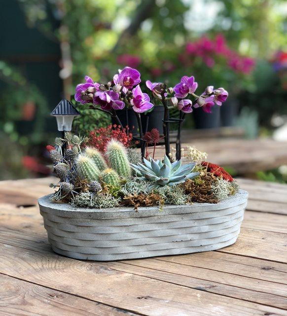 İda Kaktüs Mini Orkide Serisi
