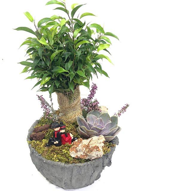 Janni Ficus Benjamin