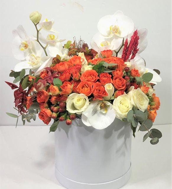 Klara Beyaz Orkide Serisi