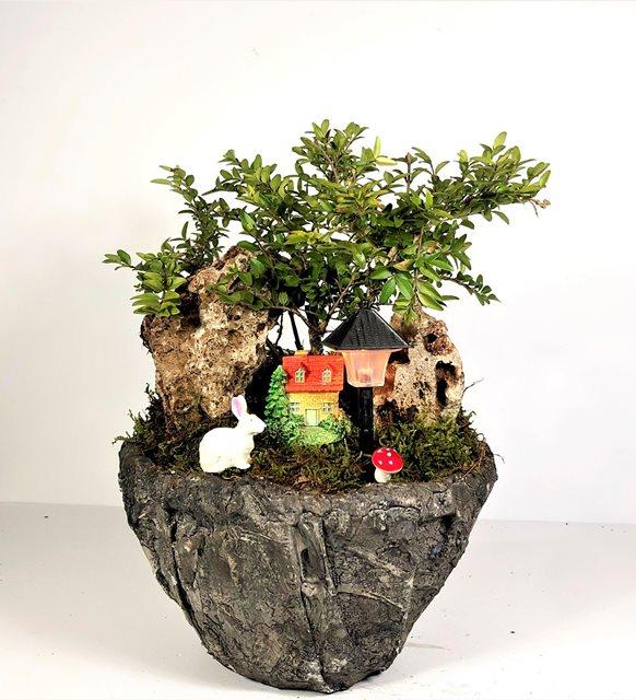 Lonicera Nitida Işıklı Bonsai Bahçemiz