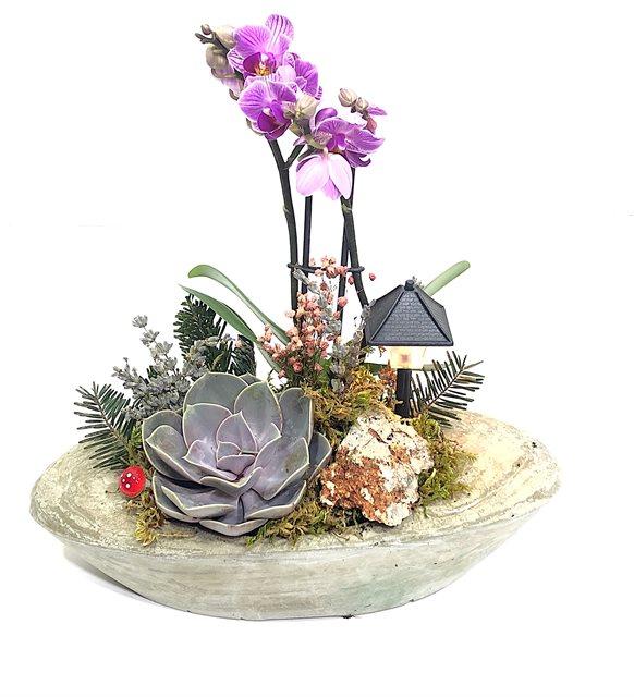 Maisa Orkide Teraryum Serisi