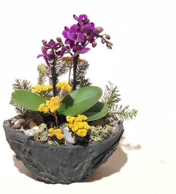 Mini Orkide Dizayn