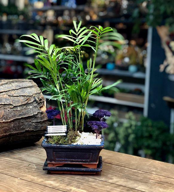 Minyatür Palmiye