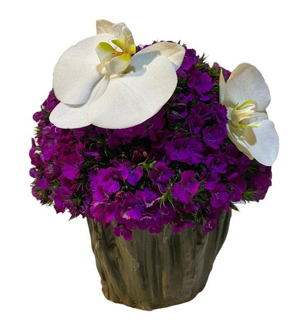 Orkideli Sevgi Çiçeği